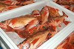 弘前丸魚 画像